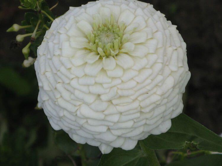 belij-iscelenie-cvetom-0002