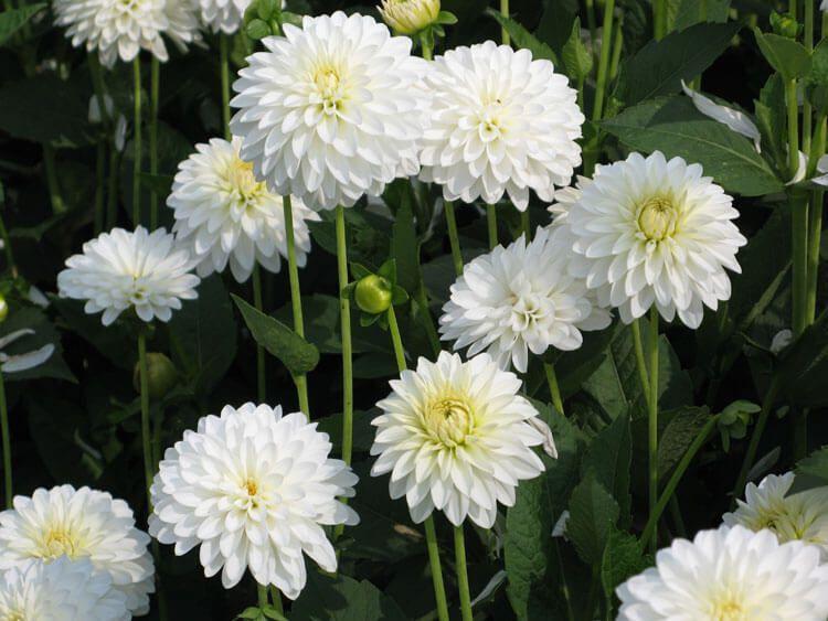 belij-iscelenie-cvetom-0010