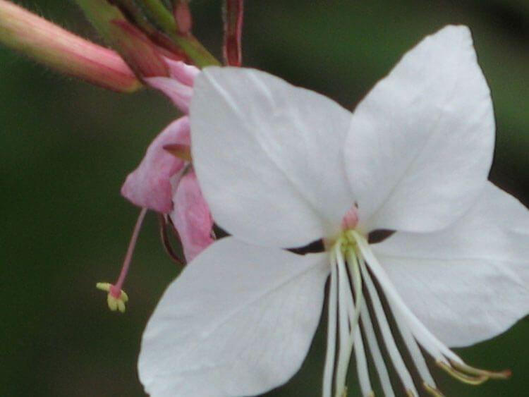 belij-iscelenie-cvetom-0012