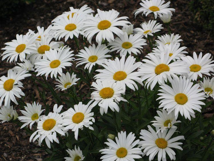 belij-iscelenie-cvetom-0017