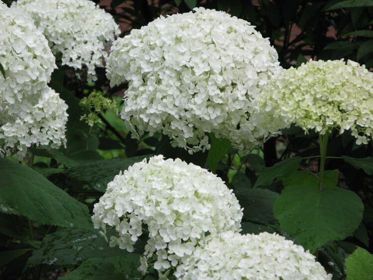 belij-iscelenie-cvetom-0018