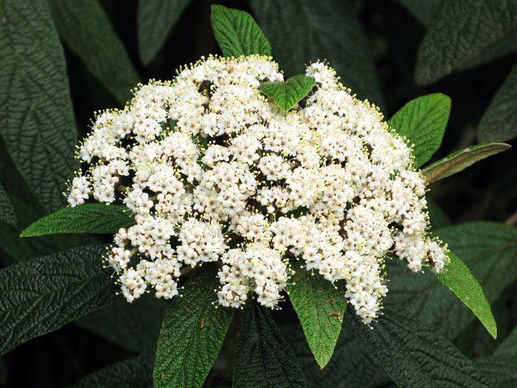 belij-iscelenie-cvetom-0022