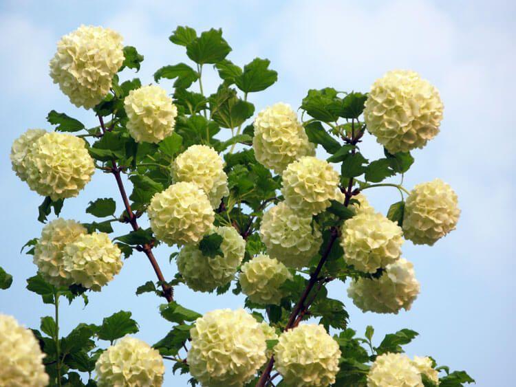 belij-iscelenie-cvetom-0025