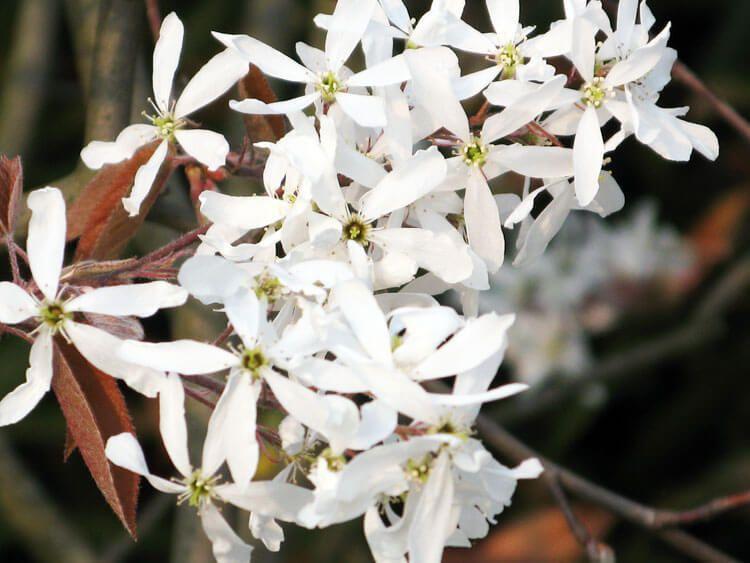 belij-iscelenie-cvetom-0030