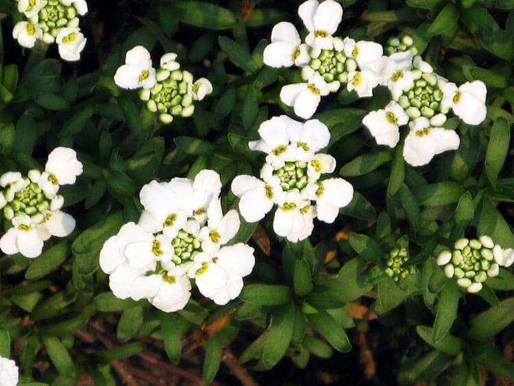 belij-iscelenie-cvetom-0031