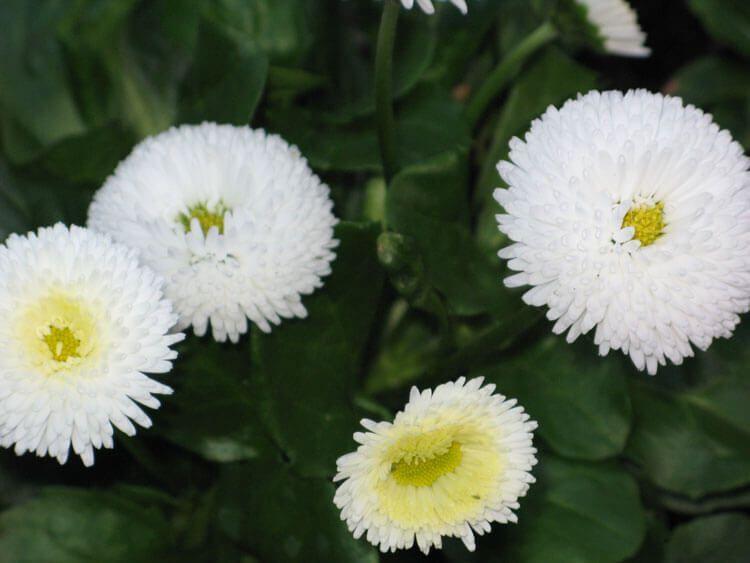 belij-iscelenie-cvetom-0032