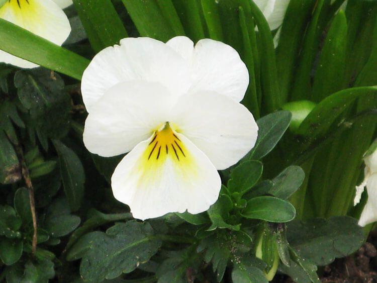 belij-iscelenie-cvetom-0033