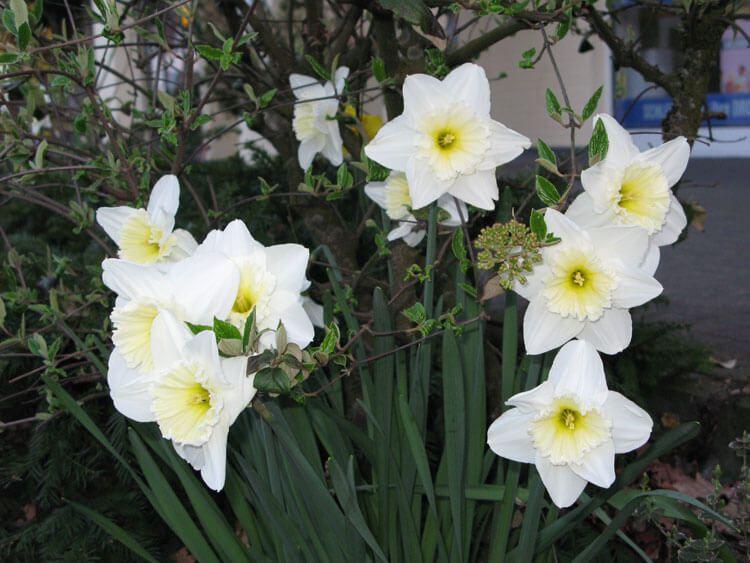 belij-iscelenie-cvetom-0037
