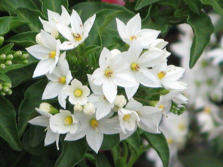 belij-iscelenie-cvetom-0038