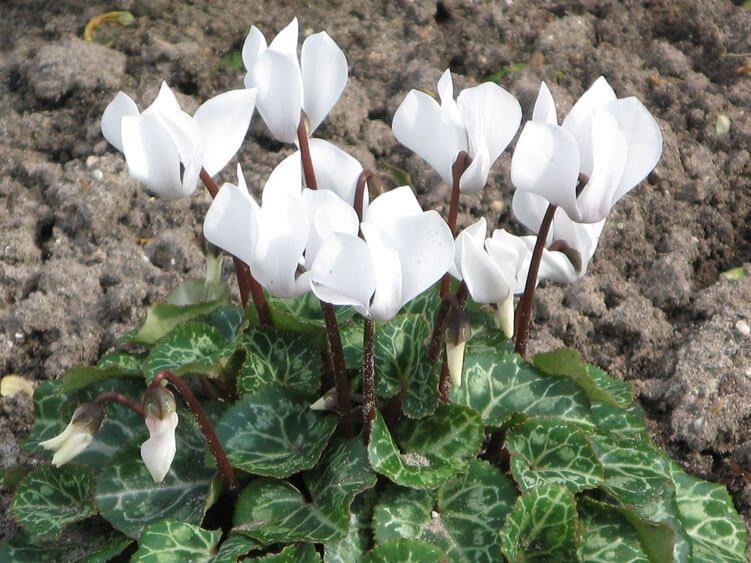belij-iscelenie-cvetom-0039