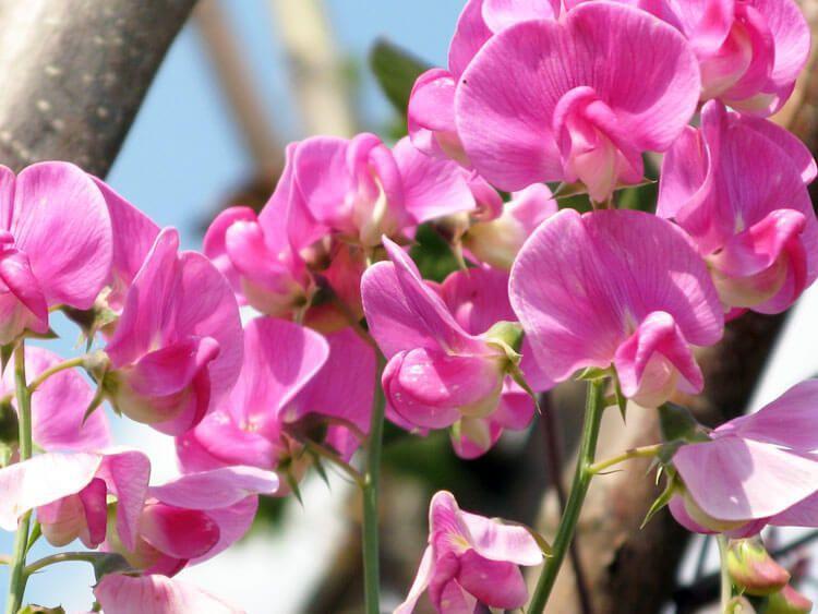 rosoviy-iscelenie-cvetom-013