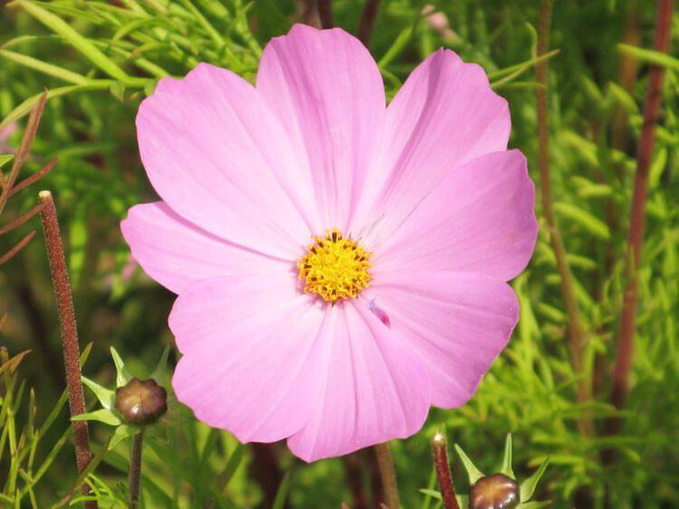 rosoviy-iscelenie-cvetom-016