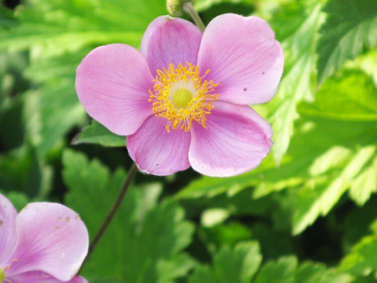 rosoviy-iscelenie-cvetom-022