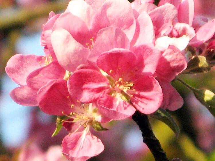 rosoviy-iscelenie-cvetom-023