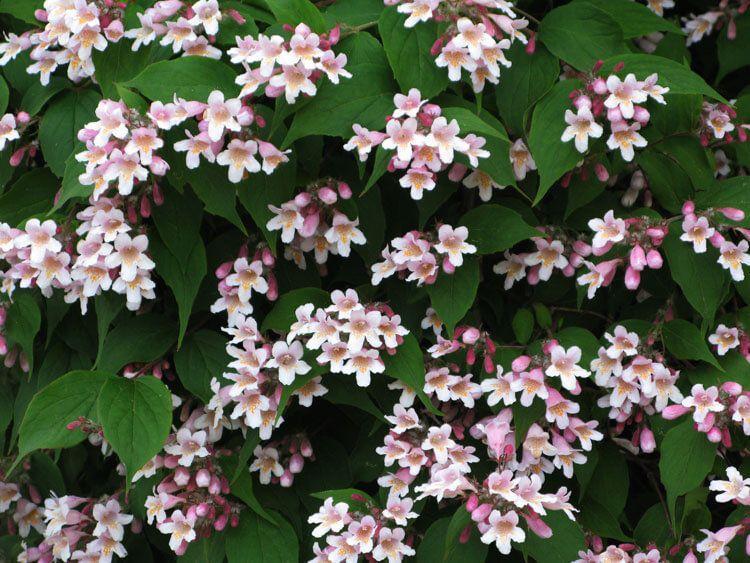 rosoviy-iscelenie-cvetom-025