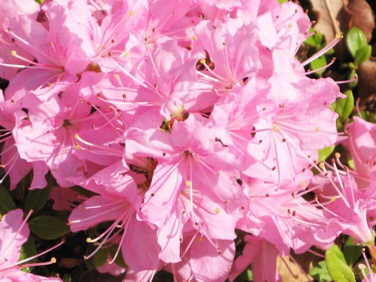rosoviy-iscelenie-cvetom-029