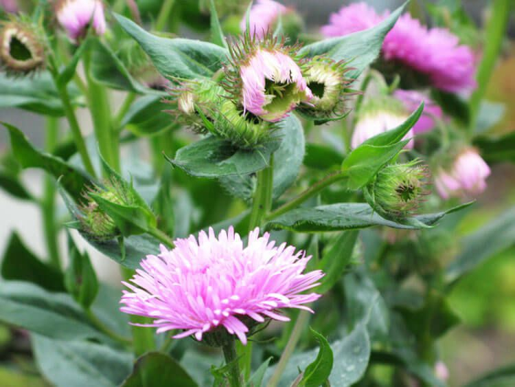 rosoviy-iscelenie-cvetom-031