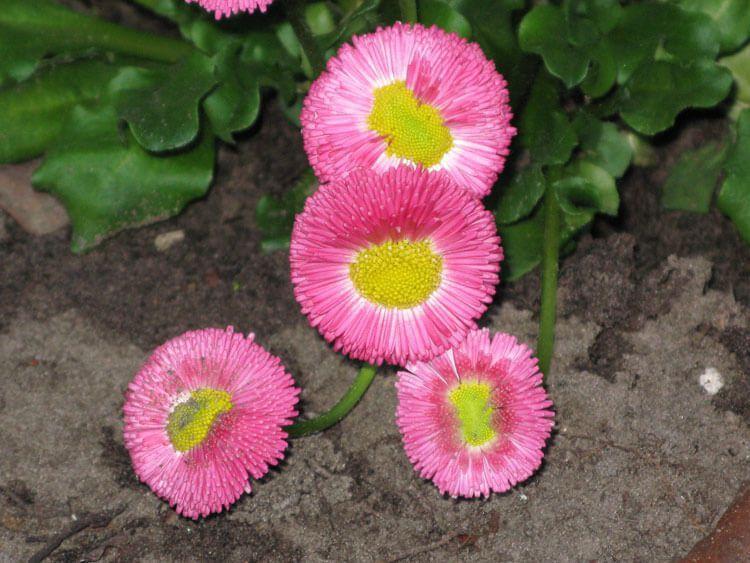 rosoviy-iscelenie-cvetom-032