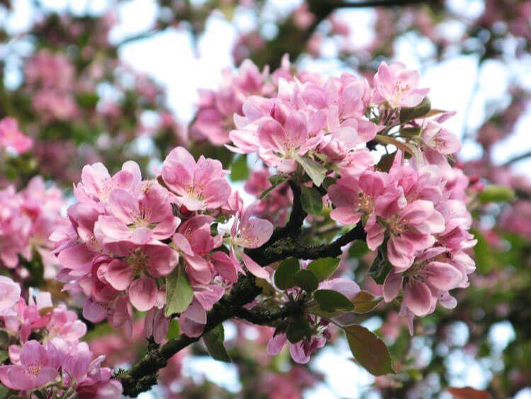 rosoviy-iscelenie-cvetom-034