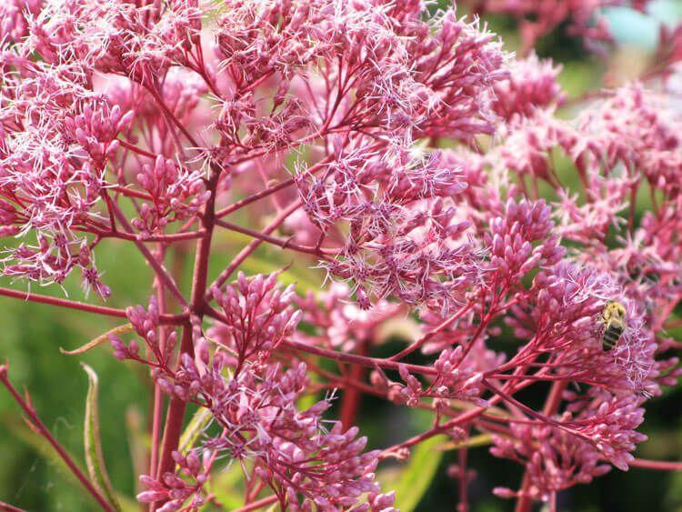 rosoviy-iscelenie-cvetom-035