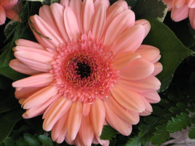 rosoviy-iscelenie-cvetom-038
