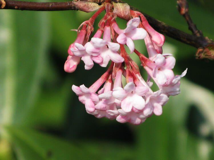 rosoviy-iscelenie-cvetom-039