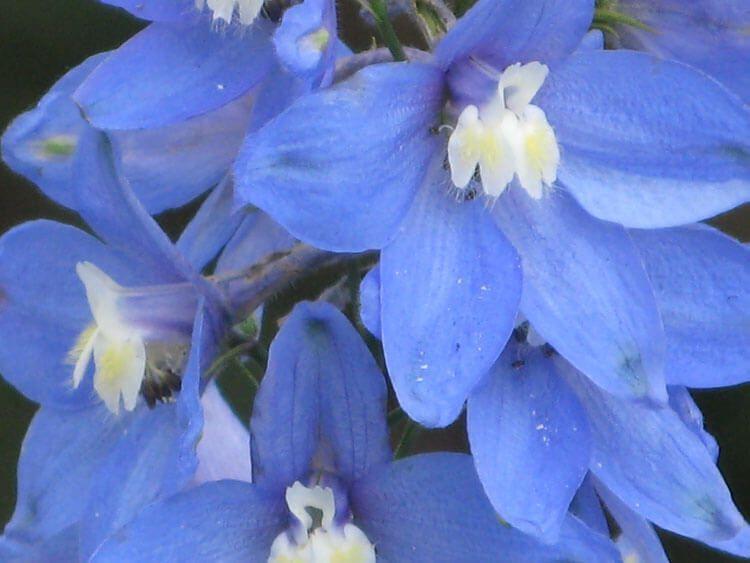 blau-014