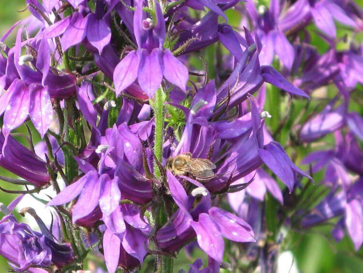 violet-010