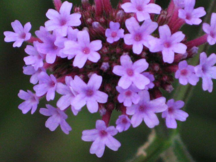 violet-013