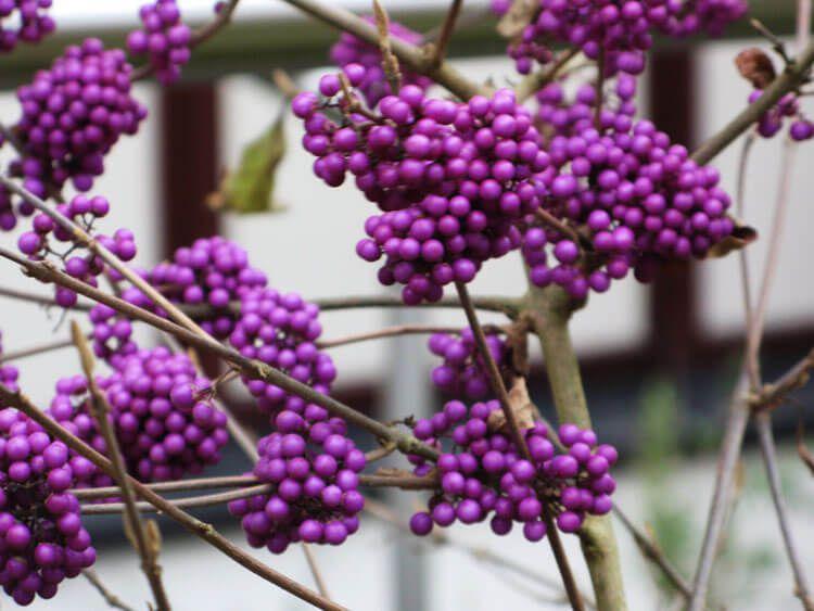 violet-015