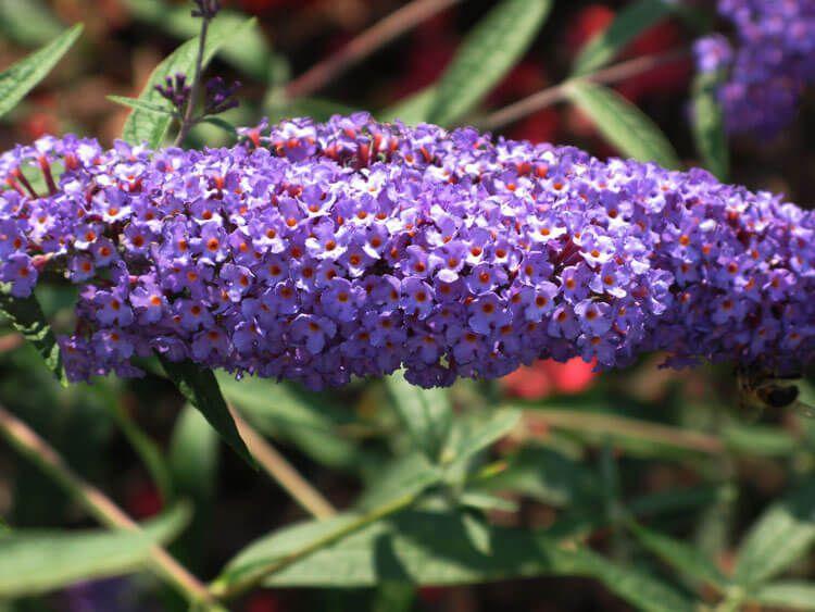 violet-016
