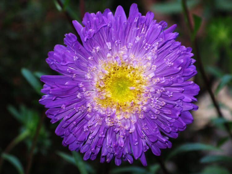 violet-020