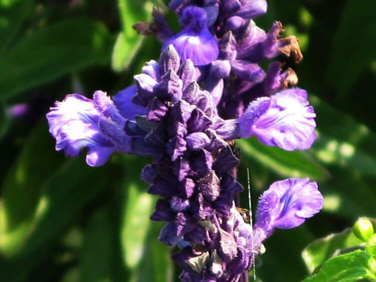 violet-022
