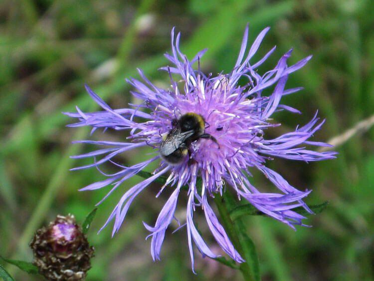 violet-030