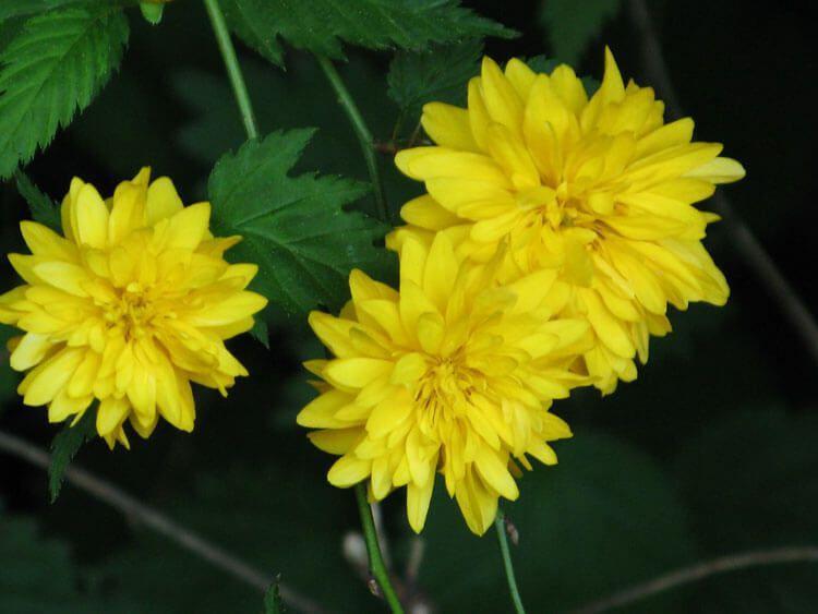 gelb-013