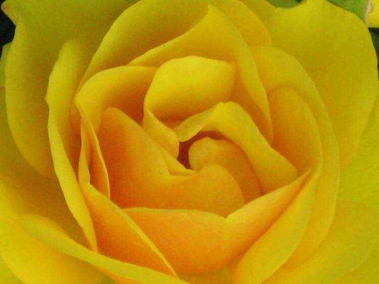 gelb-025