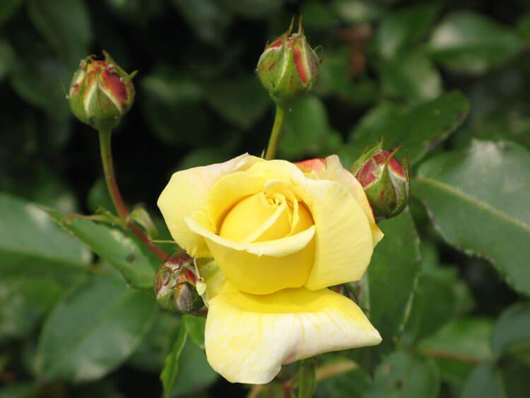 gelb-035